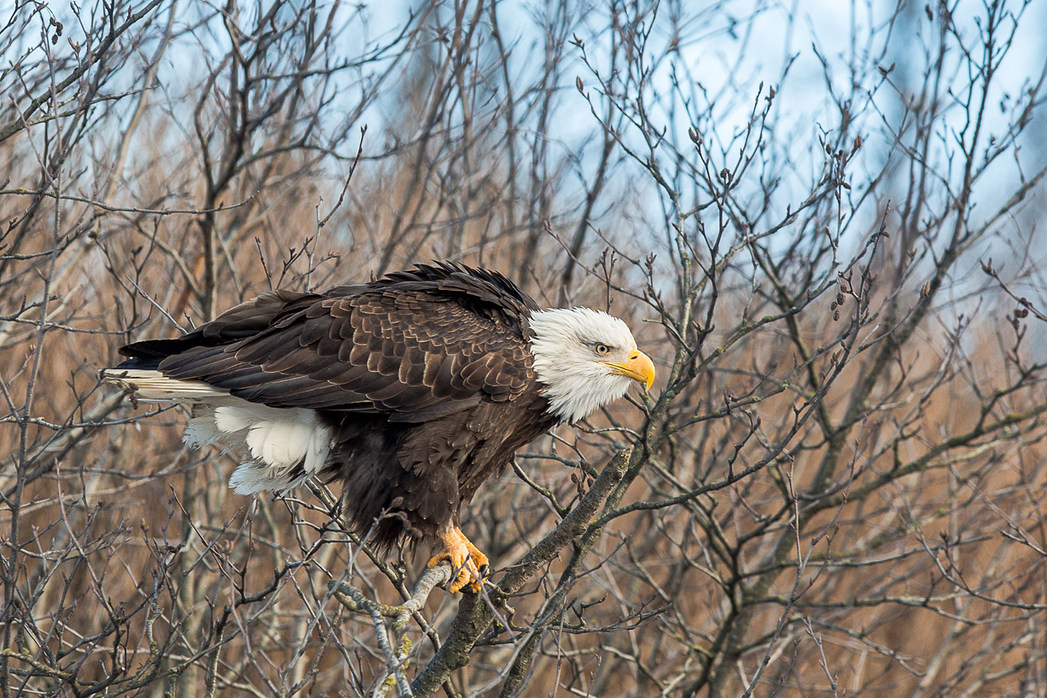eagle-gibson-cove-fb-(1-of-1).jpg
