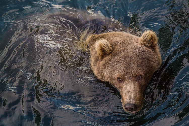bear-salonie-swimmer-(1-of-1).jpg