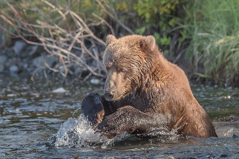 8-27-bear-rough9-(1-of-1).jpg