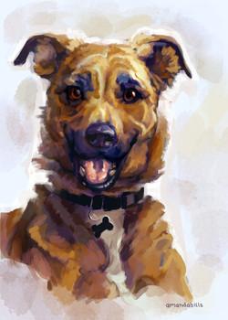 unique personalized pet portrait