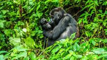 John C Adams Reviews 'Congo'