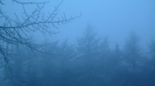 John C Adams Reviews 'The Mist'