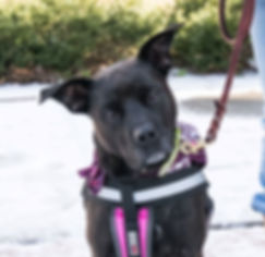 Dog Cheese up for adoption with Pet Rescue of Mercer
