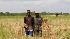 Community Rice Project to Support Food Security