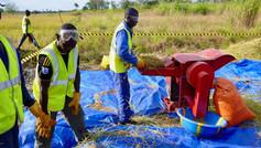 Community Rice Threshing Machine supplied by Sunbird