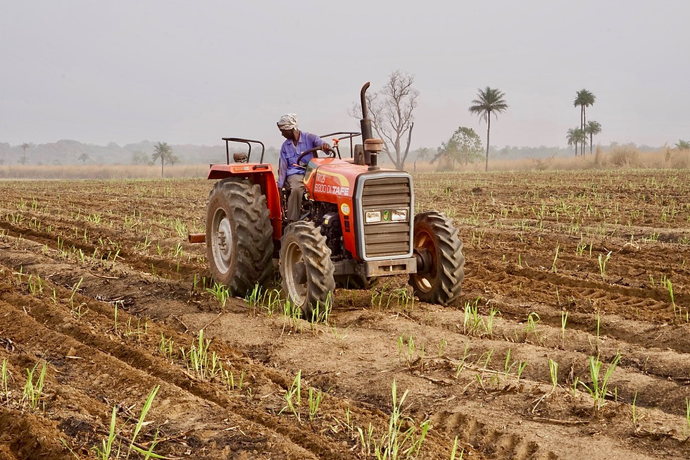 Ratooning and field maintenance has commenced at Sunbird Bioenergy Sierra Leone in preparation of the 2021 production season. More than...