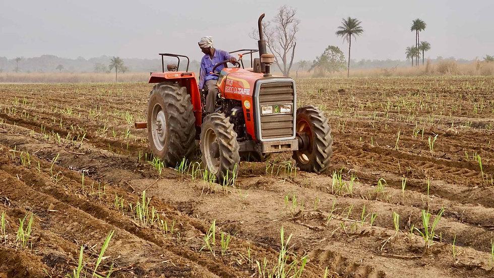 Sunbird Bioenergy Sierra Leone Sustainable Sugarcane Ratooning