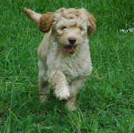 puppy05.jpg