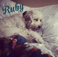 Ruby_0003.jpg