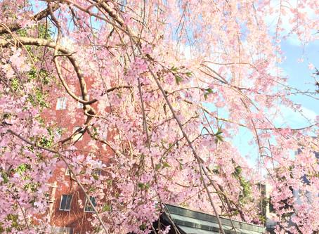 桜の季節にも、Bottle Flyerは大活躍です