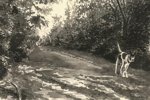 Dog Walk Avenues