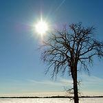 fullsize tree w sun_edited_edited.JPG