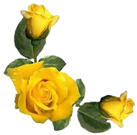 Yellow Rose_edited_edited.png