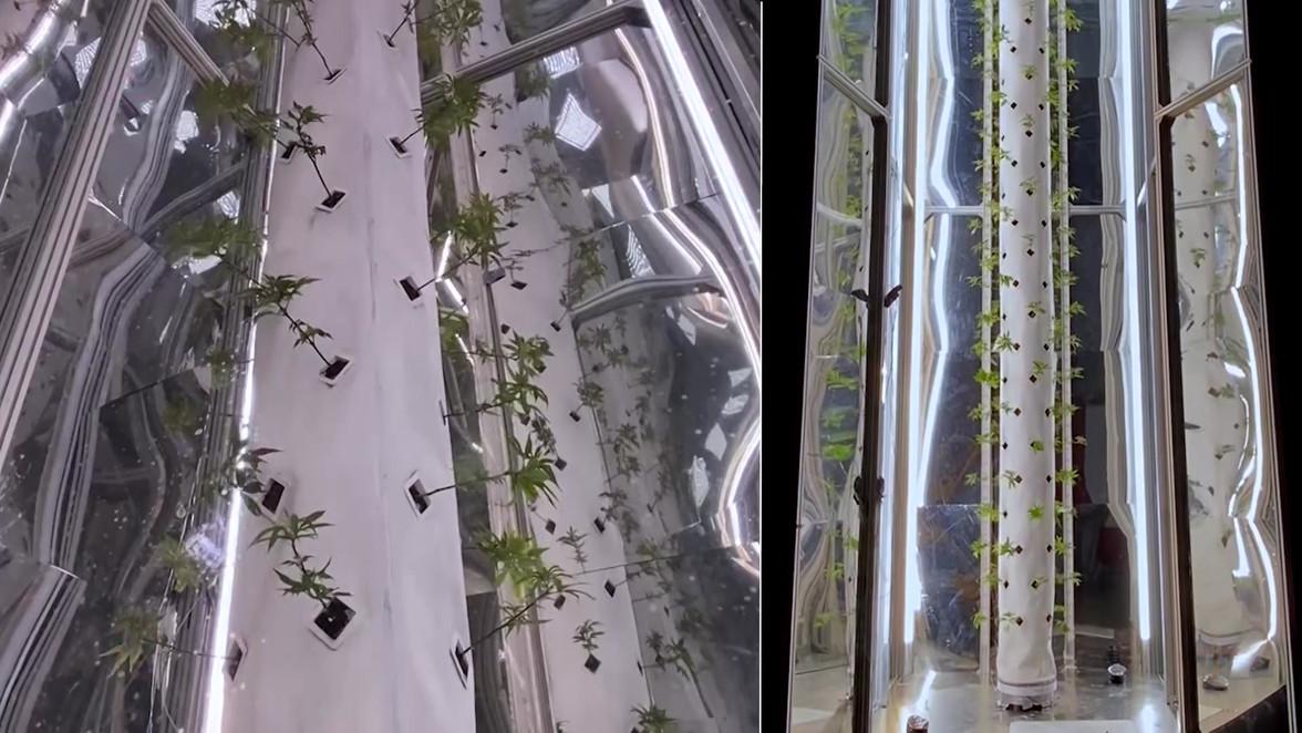 Rotating Plants