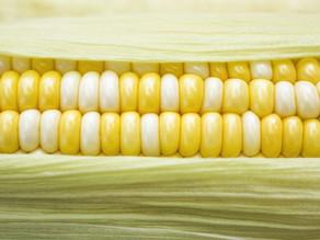 Top 10 corn stripper