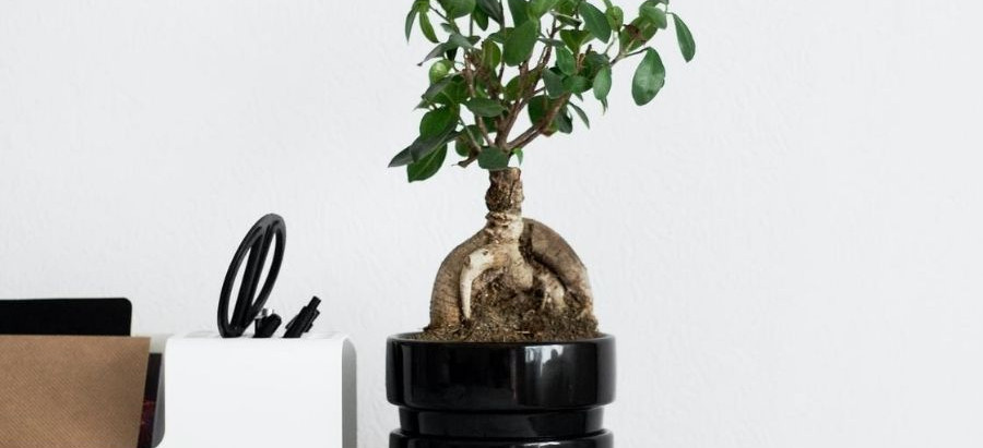 The impact of minimalism on the environment
