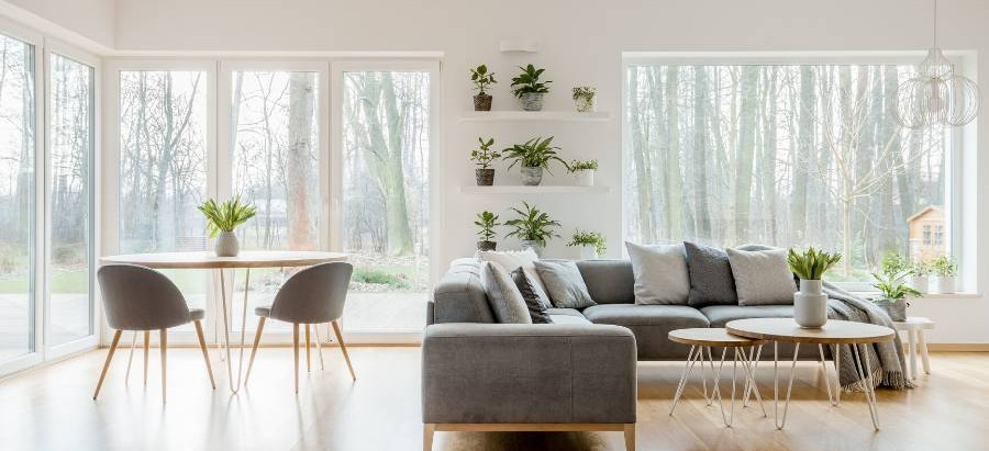 6 interior plants for a minimalist home