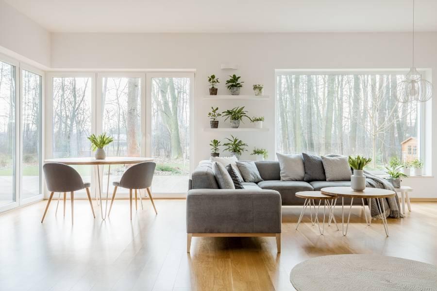 minimalist interior plants for living room