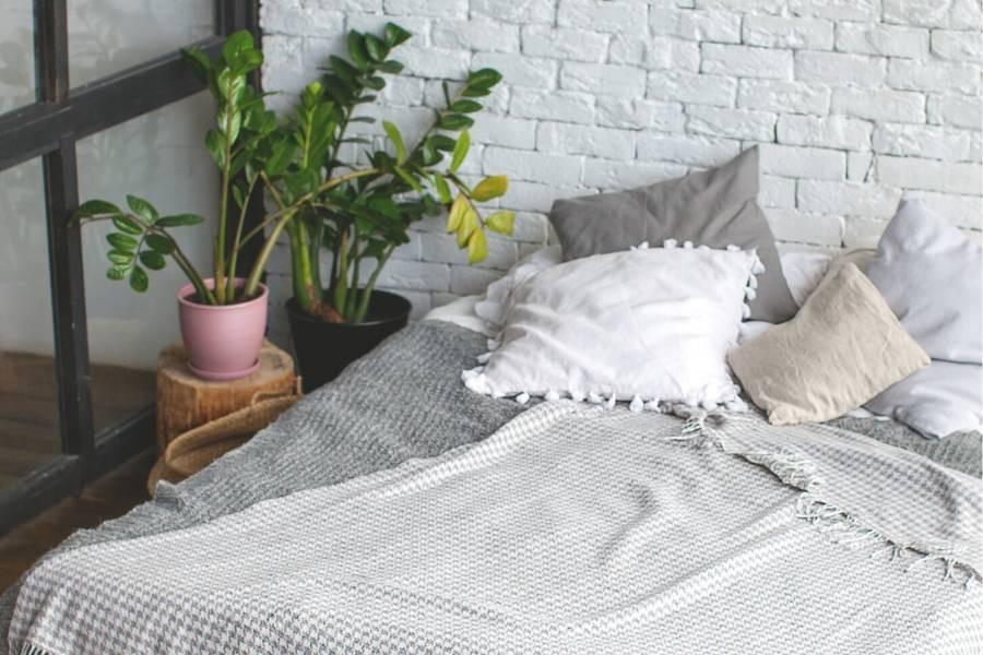 minimalist plant on a small bedroom