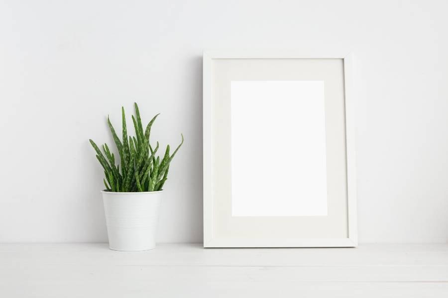 aloe vera small pot home decor minimalist