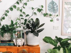 Estas son las cuatro plantas ideales para decorar tu casa en verano
