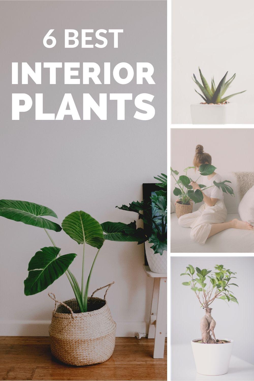 6 Best Interior Plants for minimalist decor