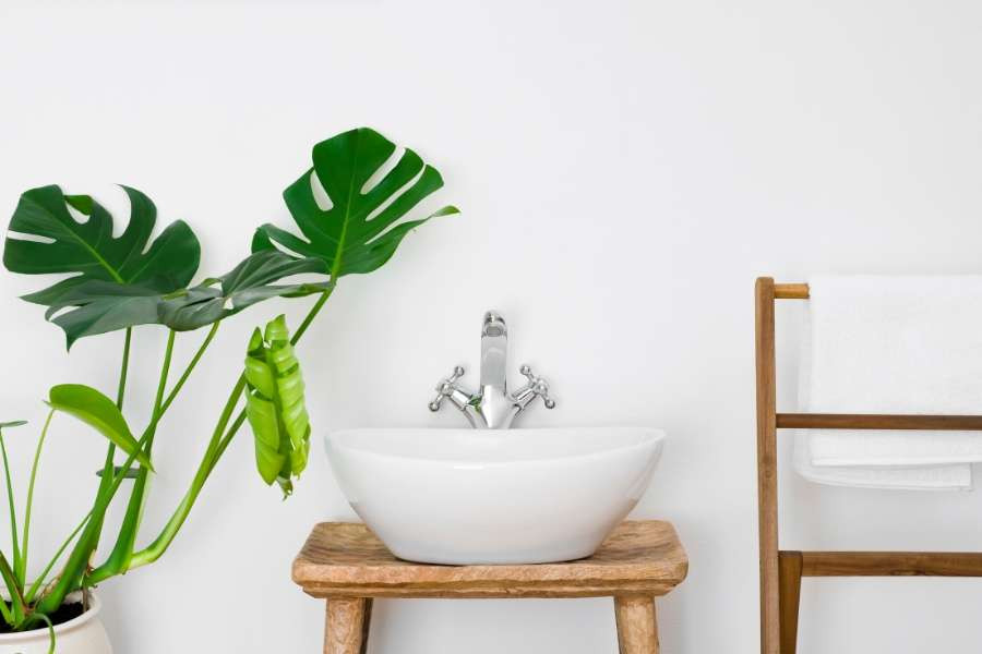 minimalist design idea with white sink and green monstera plant