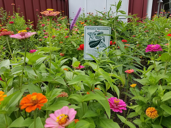 Monarch Waystation.jpg
