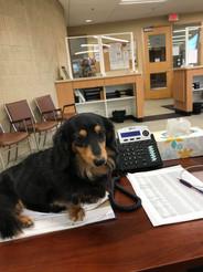 Sheela the Township Dog!