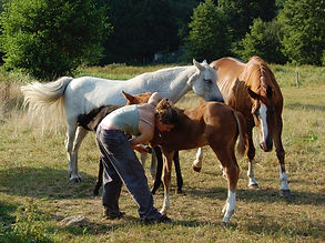Travail à pied, Travail au sol, Travail à cheval, Travail en liberté, Ethologie, Equitation Ethologique, Chuchoteur, horsemanship, Equitation d'extérieur, Équitation de loisir, Entraînement, compétition, Dressage classique, Western, Cavalier professionnel, dresseur à domicile, chevaux au travail, Débourrage, Débourrage éthologique Travail à pied, Travail au sol, Travail à cheval, Travail en liberté, Ethologie, Equitation Ethologique, Chuchoteur, horsemanship, Equitation d'extérieur, Équitation de loisir, Entraînement, compétition, Dressage classique, Western, Cavalier professionnel, dresseur à domicile, chevaux au travail, Débourrage, Débourrage éthologique Travail à pied, Travail au sol, Travail à cheval, Travail en liberté, Ethologie, Equitation Ethologique, Chuchoteur, horsemanship, Equitation d'extérieur, Équitation de loisir, Entraînement, compétition, Dressage classique, Western, Cavalier professionnel, dresseur à domicile, chevaux au travail, Débourrage, Débourrage éthologique T