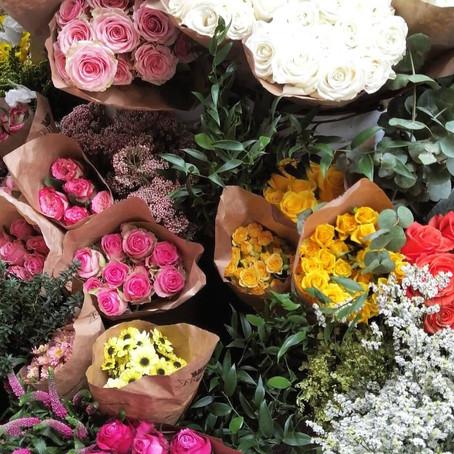 Bologna in fiore, tra colori e aria di primavera