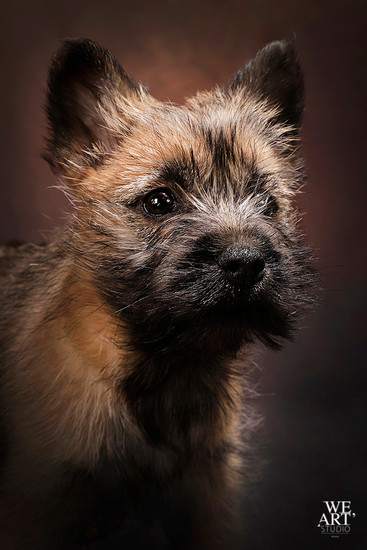 photographe blois portrait animal chien