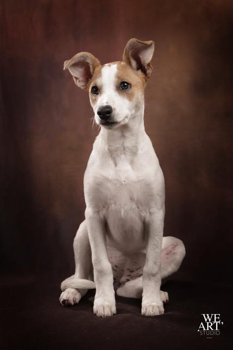 Photographe chien portrait blois 41000 loir et cher vineuil