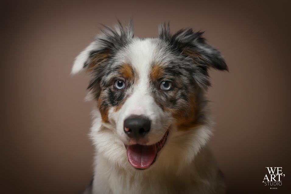 photographe blois 41 portrait animal chien 41
