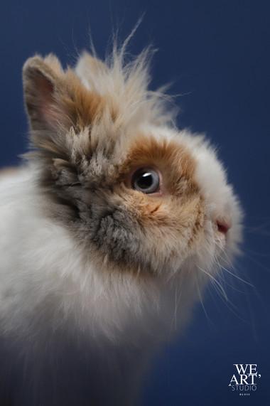photographe blois portrait animaux studio loir et cher