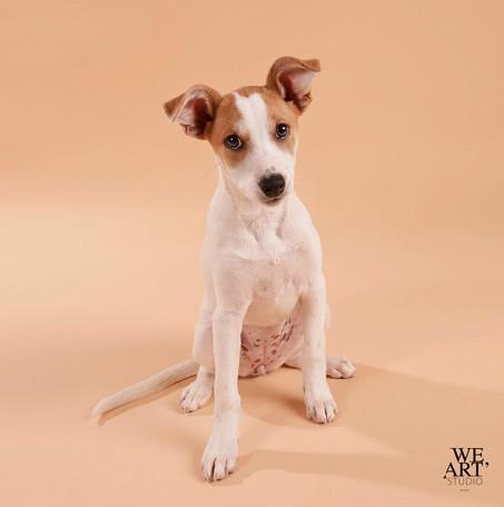 chien photographe animalier blois 41 loir-et-cher