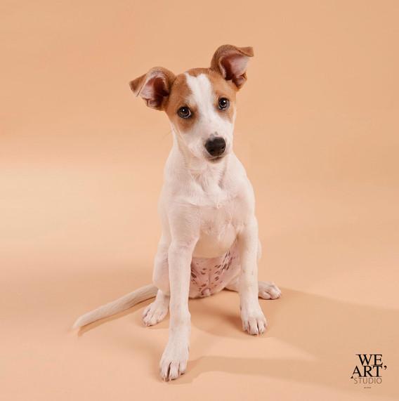 photographe blois portrait animalier studio chien 41