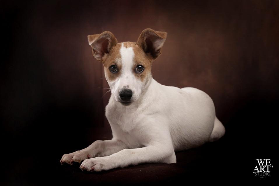 photographe blois portraitiste chien animal 41 loir et cher vineuil