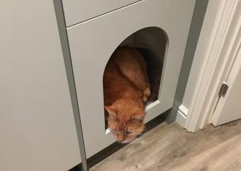cat-in-the-hall-002-400x284.jpg