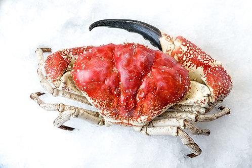 Live King Crab (min size 2.5kg)