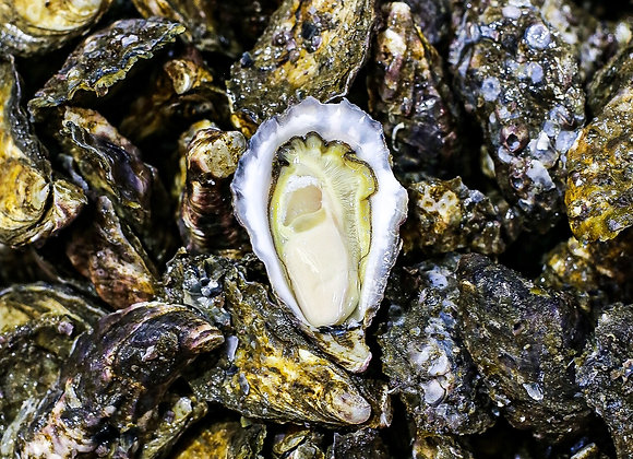 Sydney Rock Oysters (1dz)