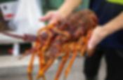 Southern Rock Lobster 2 (1 of 1).jpg