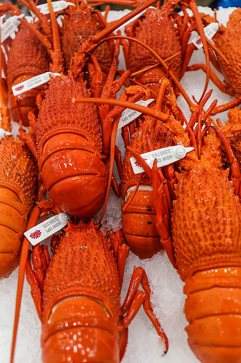 Cooked Eastern Rock Lobster (min size 700 gram)