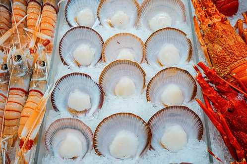 Scallop Half Shell (1dz)