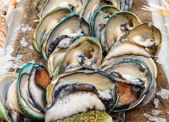 Live Baby Abalone (each)