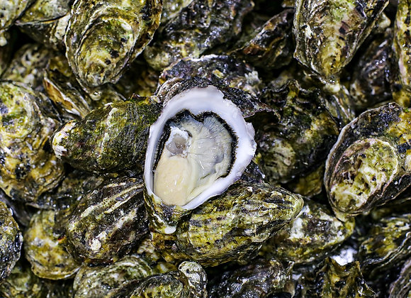 Pacific Oysters Standard (1 dz)