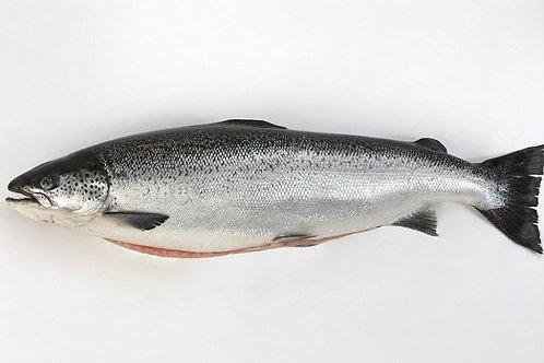 Atlantic Salmon (min size 4.5kg)