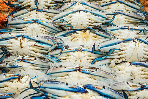 Blue Swimmer Crab (MALE) - Green (1kg)