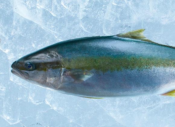 Whole Hiramasa Kingfish (Min 3kg)