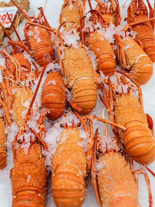 Lobster Cooked W.A